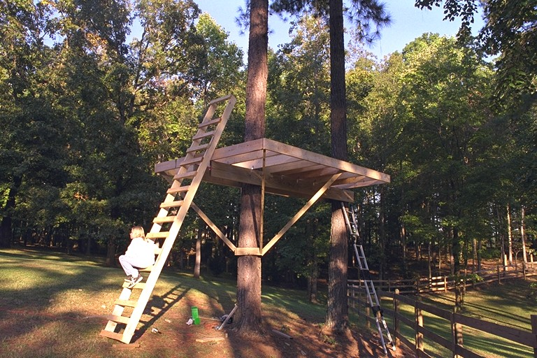 treehouse5.jpg